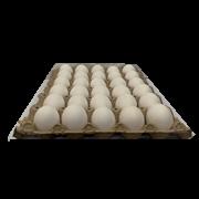 Egg Small 1 Tray