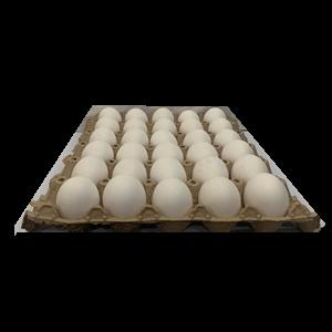 Egg Medium 1 Tray