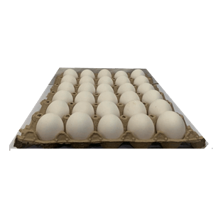 Egg Small 1 Tray